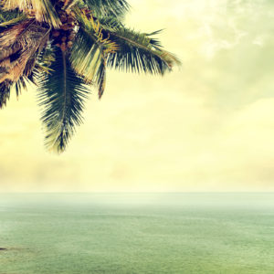 Hulalele Summer6 カイマナヒラ